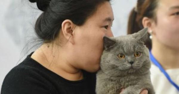 صينيون يدمنون على شمّ القطط