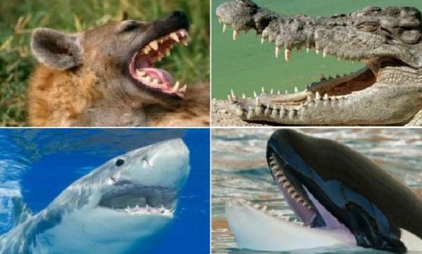 صور: تعرف على الحيوان صاحب أقوى فك مفترس في العالم