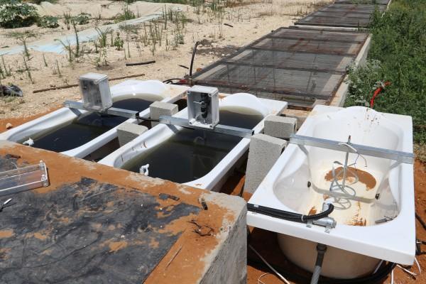 (خضوري) تُشغّل وحدة معالجة المياه العادمة باستخدام الطحالب