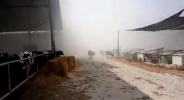 فيديو: اندلاع حريق في مزرعة مواشي بمستوطنة (ناحل عوز) شرق غزة