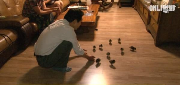 رجل كوري يدرب 21 بطة للتنزه معه.. والنتيجة مُذهلة