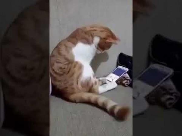 قط  يذيب القلوب بردة فعله عند رؤيته لصاحبه المتوفي على شاشة الهاتف