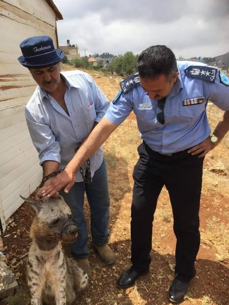 نواة أولى لشرطة بيئية في فلسطين... وإنقاذ ضبع جريح من باكورة أعمالها