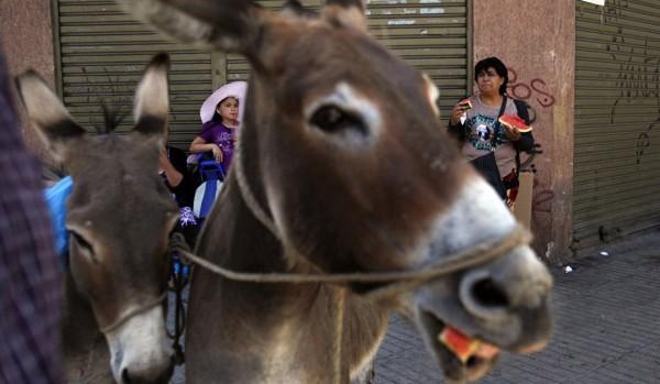 الشرطة المصرية تداهم مزرعة لذبح الحمير.. فتفاجأت بكارثة أكبر