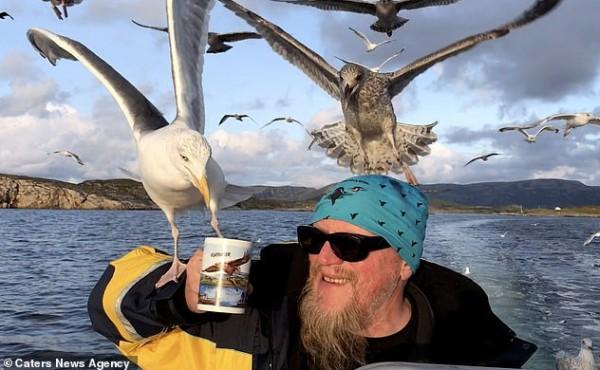 """طيور النورس تصارع قبطاناً بسبب """"كوب شاي"""""""
