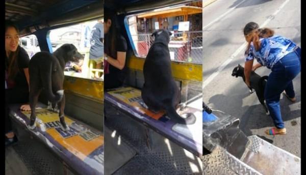 شاهد: كلب يشتاق لصاحبته فيصدم الناس بتصرفه