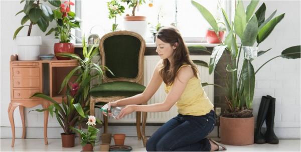 نباتات منزلية تساعدكِ على تنقية الهواء داخل منزلك وتحميكِ من هذه الأمراض