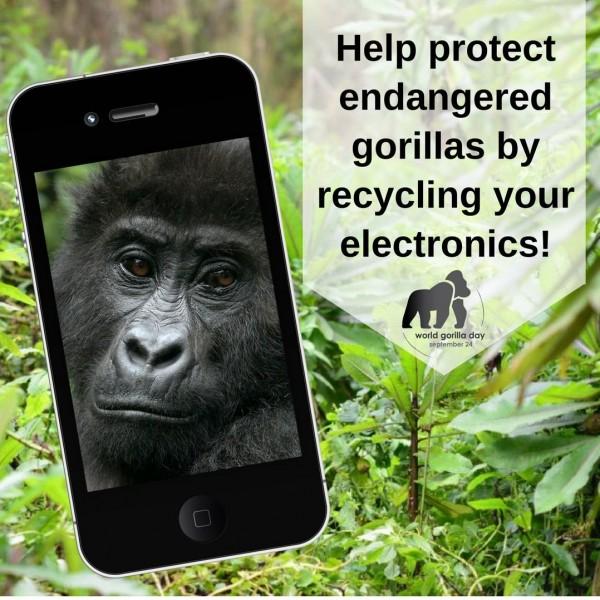 """هاتفك القديم يُنقذ """"الغوريلا"""" من الانقراض.. فما العلاقة؟"""