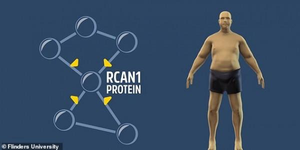 الحلم يقترب.. العلماء يكتشفون الحل السحري لإيقاف زيادة الوزن