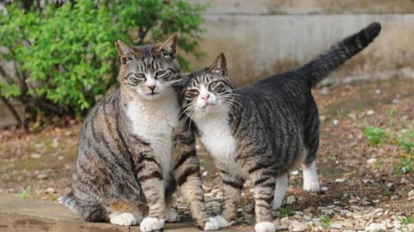 لأول مرة.. الصين تبدأ استنساخ القطط عام 2019