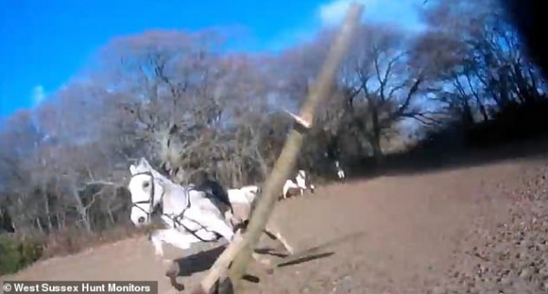 ذعر فرسان بسبب غضب حصان علق رأسه بحاجز خشبي
