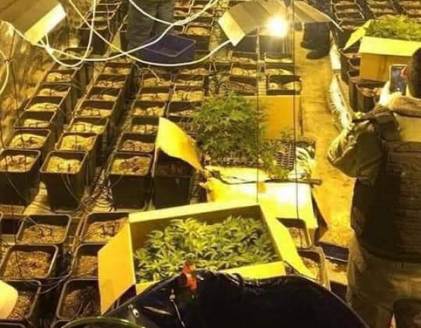 """""""الوقائي"""" يضبط مشتلاً لزراعة المخدرات في محافظة رام الله والبيرة"""