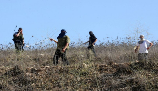 مستوطنون يقطعون قرابة 20 شجرة زيتون بقرية المغير شرق رام الله