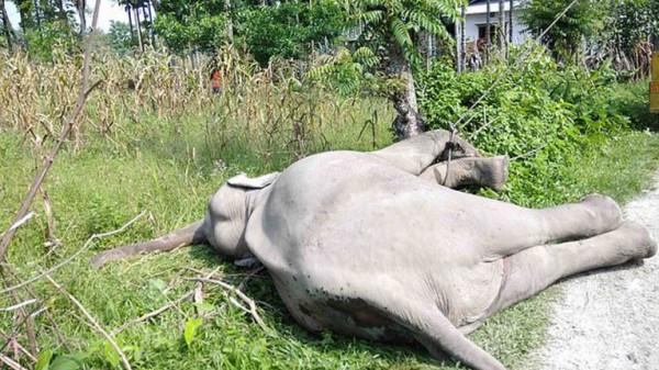 فيلان بريان يموتان صعقًا بالكهرباء في الهند