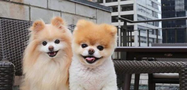 يتابعه 16 مليون شخص على فيسبوك.. ألطف كلب في العالم يموت حزناً