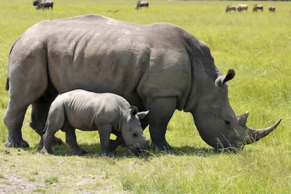 """هل سنقول قريبًا """"وداعًا وحيد القرن""""؟"""