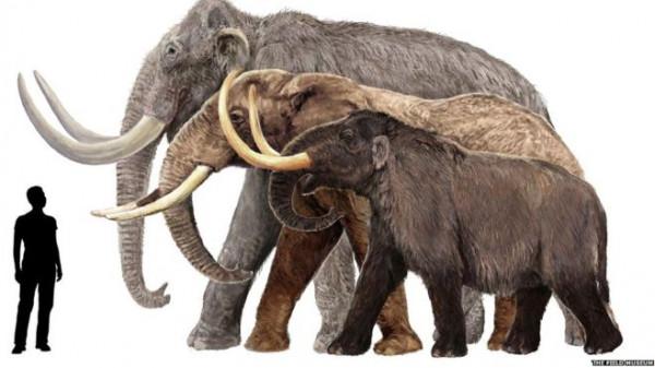 ما الفرق بين الماموث والفيل؟