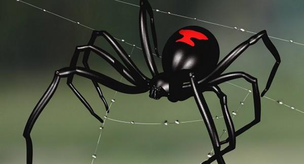 """تعرف على العنكبوت التي """"ترضع"""" صغارها الحليب"""