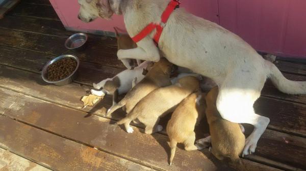 مأوى مهدد بالإزالة ببيت ساحور يفتح الباب واسعاً أمام مصير الكلاب الضالة