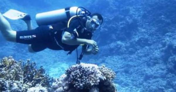 علماء أمريكيون ينجحون فى تحويل مياه البحر إلى وقود