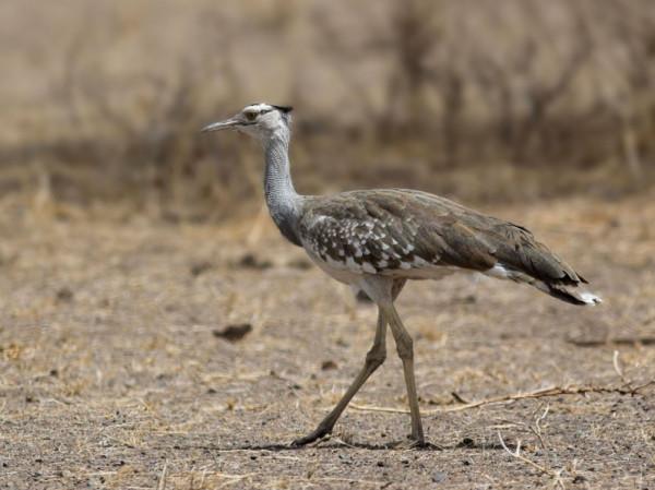 5 آلاف ريال لمن يحرر هذا الطائر في المملكة
