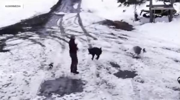 شاهد: كلب ينقذ صديقه من الموت بطريقة مثيرة