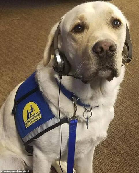 """""""رايدر"""".. كلب يصاحب المجني عليهم بالمحاكم الأمريكية لمواساتهم"""