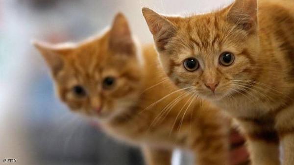 احذر.. القطط ماكرة وتتجاهلك عن قصد