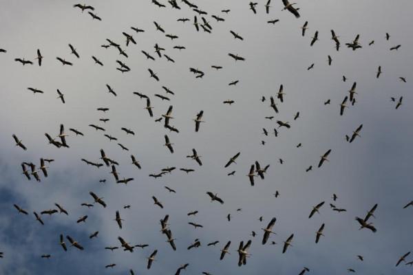 """""""التعليم البيئي"""" يصدر نشرة ليوم الطيور المُهاجرة العالمي"""
