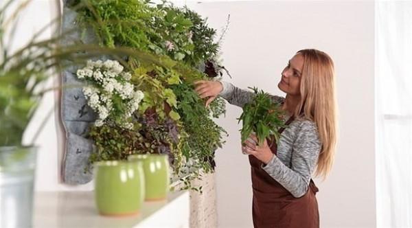 جدار النباتات في المطبخ.. اتجاه جديد في الديكور