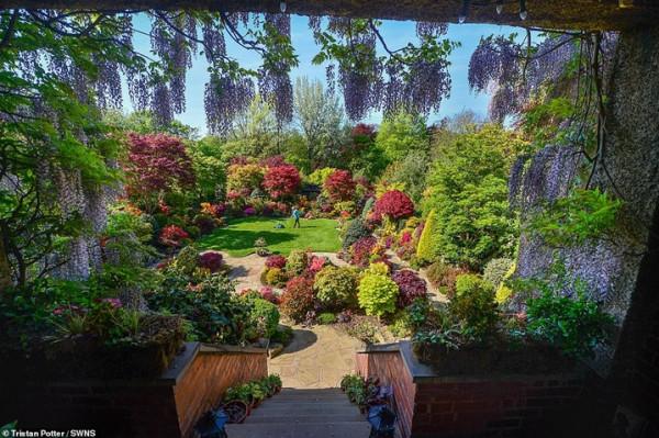 زوجان يزرعان حديقة منزلهما مدة 37 عاما والنتيجة مبهرة