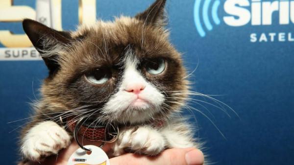 بعد جمع ثروة 100 مليون دولار.. نفوق القطة الأشهر على الإنترنت