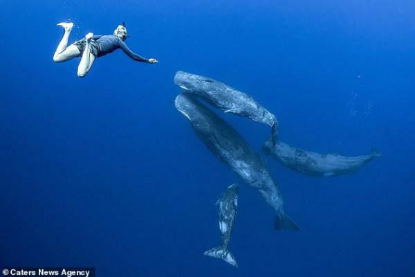 لقطات نادرة لحيتان العنبر الضخمة