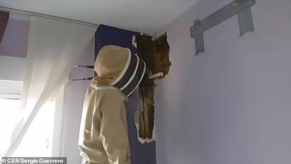 زوجان يكتشفان سر ضجيج حوائط منزلهما لمدة عامين