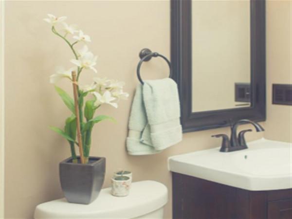 4 نباتات لديكور وتنقية الهواء في الحمام