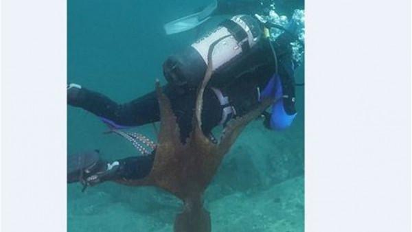 شاهد .. أخطبوط عملاق يحاول إغراق غواص في البحر