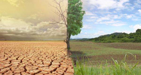 التعليم البيئي يُصدر إرشادات لليوم العالمي لمكافحة التصحر والجفاف