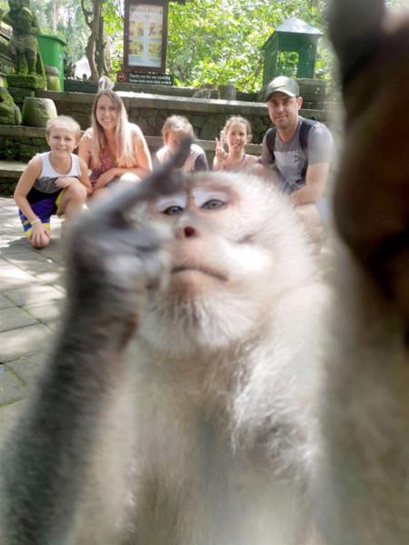 قرد يخرب صورة عائلية في غابة ببالي