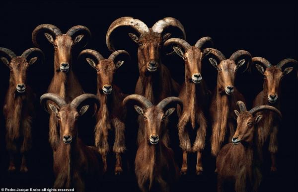 لمحة تصويرية تحذر من الوضع غير المستقر لعالم الحيوانات