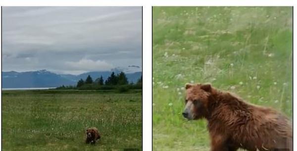مطاردة مثيرة بين غزالة ودب في الغابة.. من يفوز في النهاية؟
