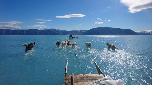 صورة نادرة تنذر بمستقبل مرعب.. كلاب تمشي على الماء