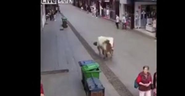 حصان يدهس امرأة في مشهد غريب مروع