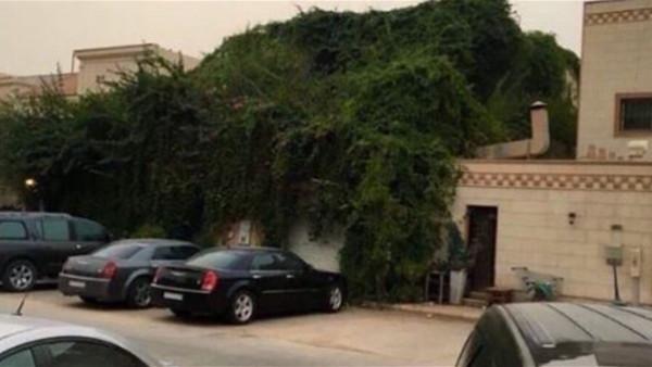 شاهد.. حيلة مواطن عربى لحماية منزله من حرارة الصيف