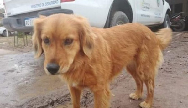 كلب وفي ينتظر خارج قسم الشرطة صاحبه بعد القبض عليه منذ عام