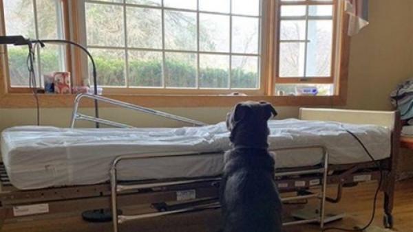 نهاية سعيدة لكلب وَفِيّ ينتظر صاحبه المتوفى