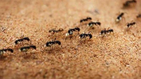 الإفتاء المصرية: لا يجوز قتل النمل إلا في هذه الحالة