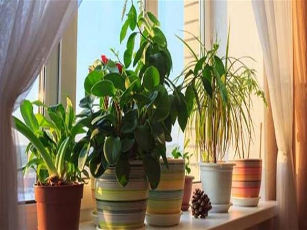 كيف تضمن بقاء النباتات على قيد الحياة خلال العطلات الصيفية؟