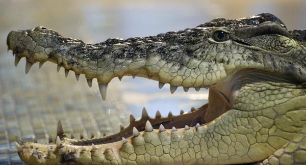 تمساح يعض امرأة ويوصلها إلى زوجها على الشاطئ
