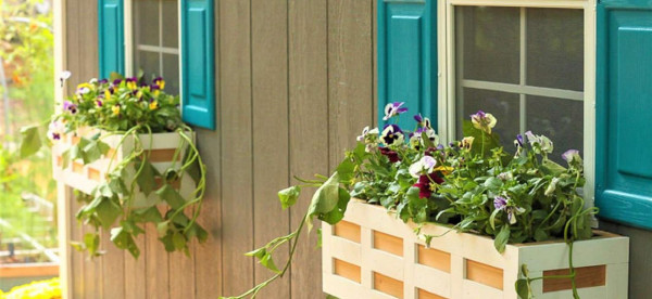 شاهد: أفكار مدهشة لوضع النبات في المنزل