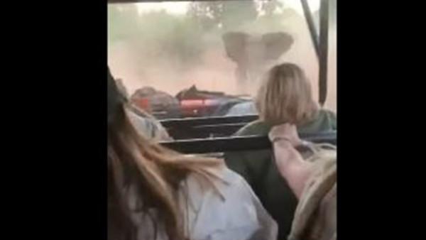 شاهد: فيل غاضب يهاجم سائحين داخل سيارة جيب